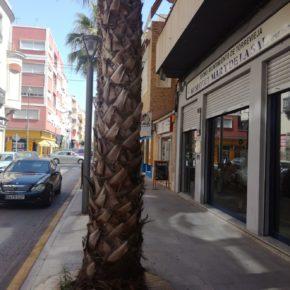 Cs Torrevieja propone trasladar la muestra permanente del Mar y de la Sal en la lonja junto a la futura ubicación de los museos flotantes
